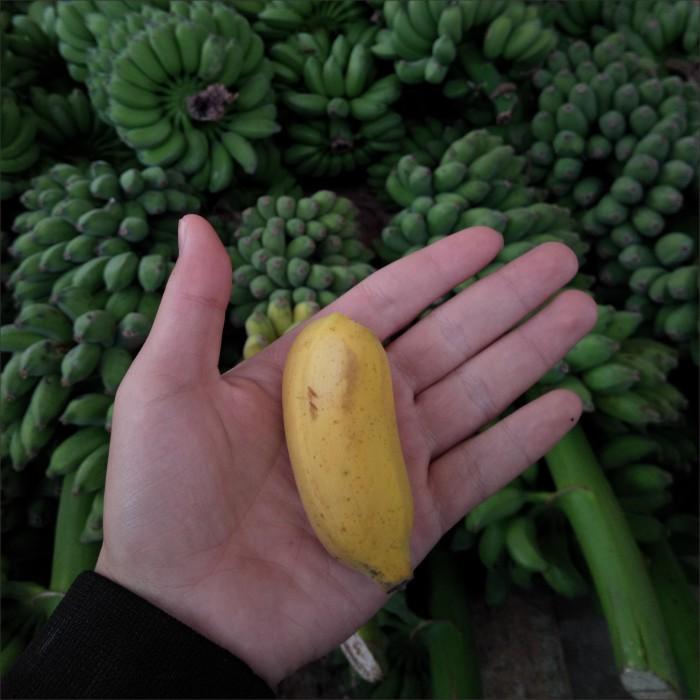 【早上砍下午发】广西小米蕉新鲜香蕉当季水果发青果多规格